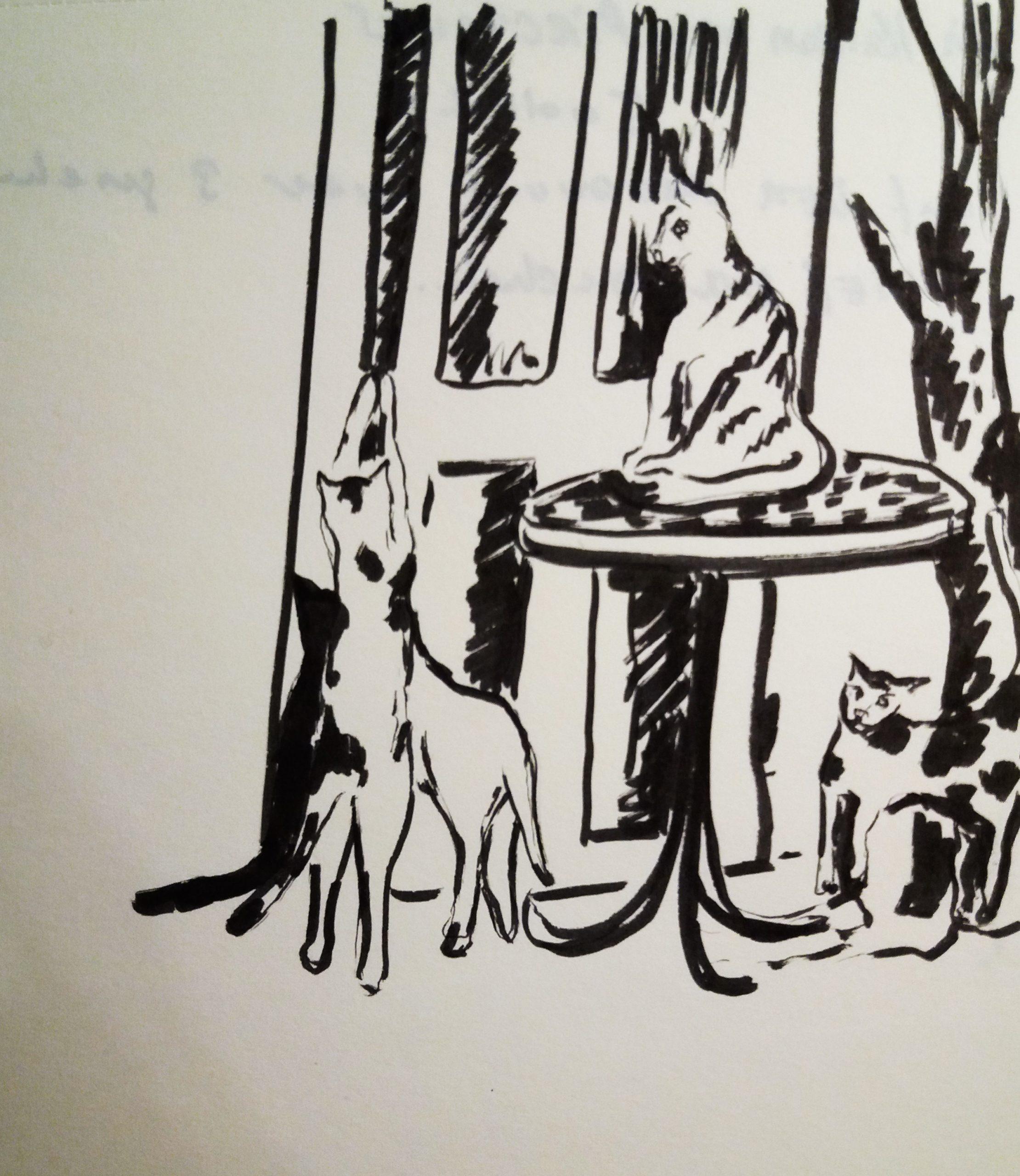 Die Katzen vom Pirchanger